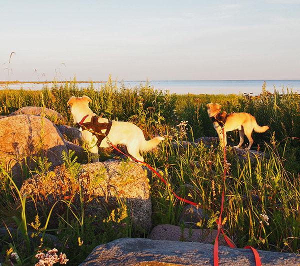 hunde im sonnenuntergang