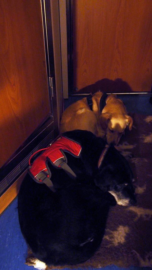 Hunde schlafen in der Kabine