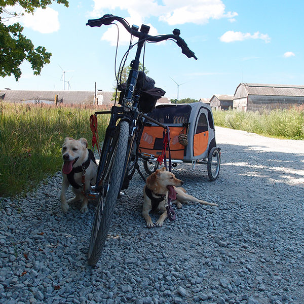 Hundetour rund um Tehumardi